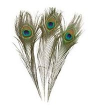 Picture of PEACOCK FEATHER